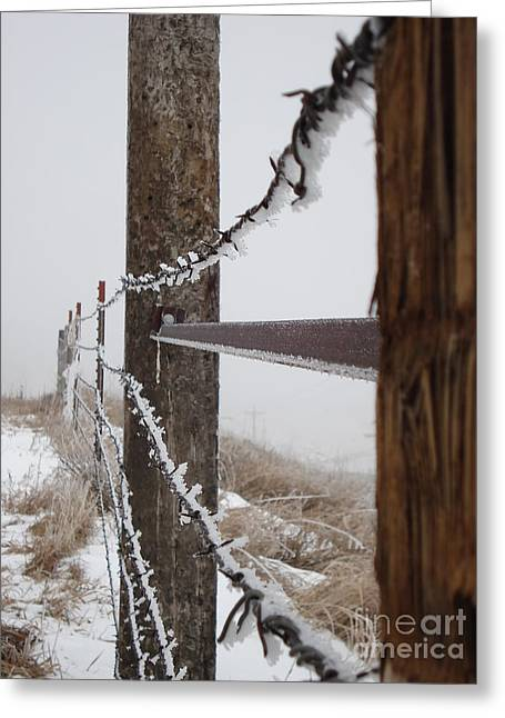 Frozen Fence Line Greeting Card by J L Zarek