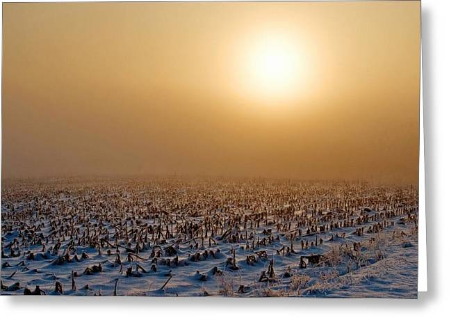 Frozen Field Greeting Card by Todd Klassy