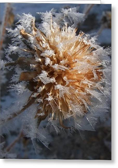 Frozen Fog Greeting Card by Kae Cheatham