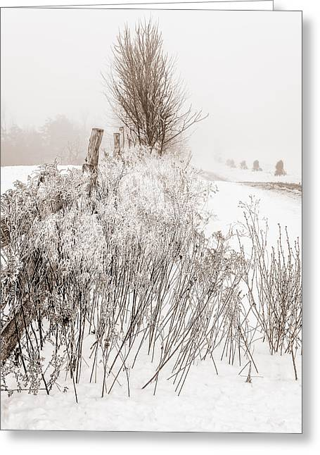 Frozen Fog On A Hedgerow - Bw Greeting Card