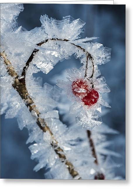 Frozen Food Greeting Card by Ted Raynor