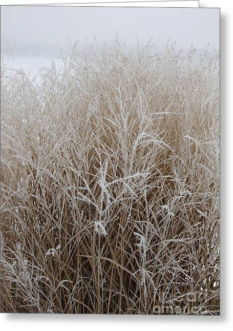 Frozen Grass Greeting Card