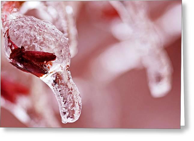 Frozen Jewel  Greeting Card by Debbie Oppermann
