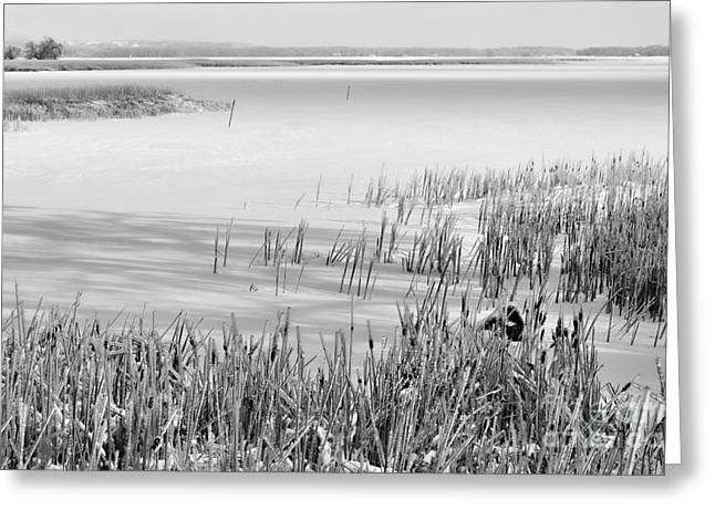 Frozen Lake And Ice Coated Bullrushes Greeting Card