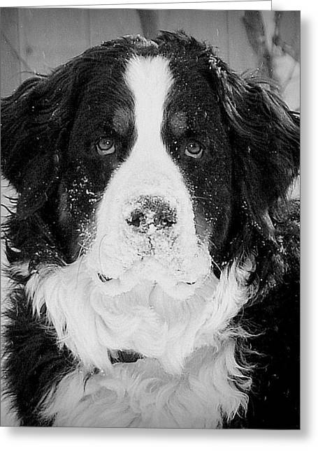 Frozen Nose Greeting Card by Barbara Dudley