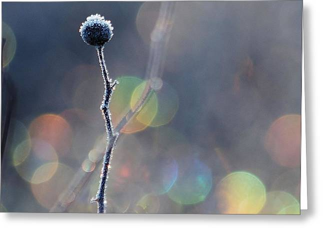 Greeting Card featuring the photograph Frozen Orb by Paul Noble