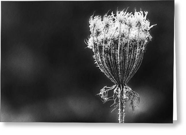 Greeting Card featuring the photograph Frozen Queen by Melanie Lankford Photography