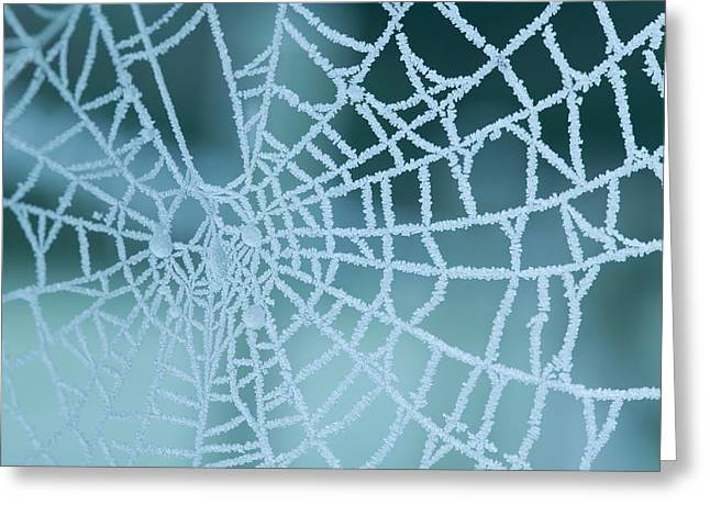 Frozen Spiders Web Greeting Card
