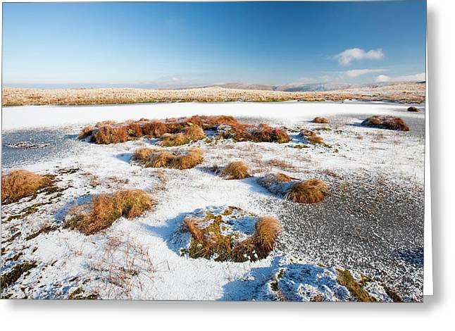Frozen Tarn Greeting Card by Ashley Cooper