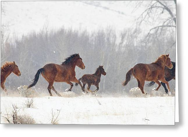 Frozen Track Greeting Card by Mike  Dawson