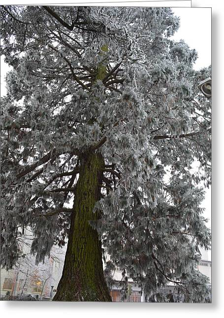 Greeting Card featuring the photograph Frozen Tree 2 by Felicia Tica