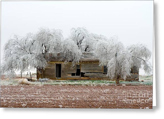 Frozen Trees And Shack Greeting Card by Mae Wertz