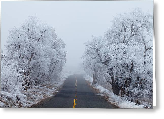 Frozen Trees Greeting Card by Darren  White