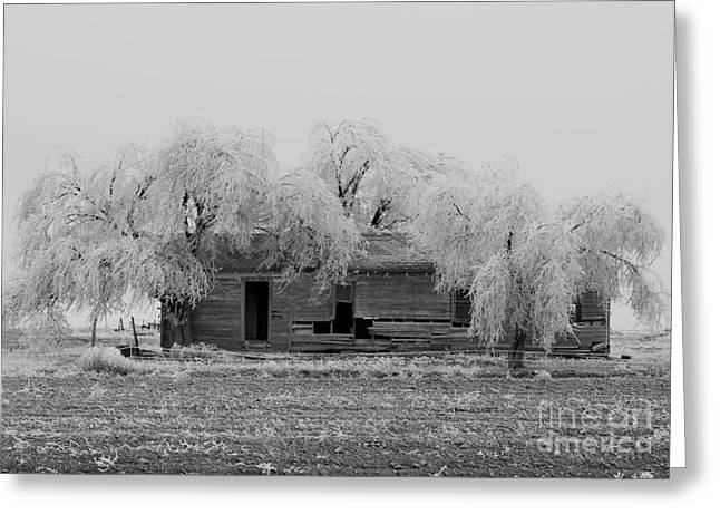 Frozen Trees In Black And White Greeting Card by Mae Wertz