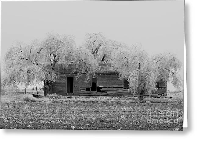 Greeting Card featuring the photograph Frozen Trees In Black And White by Mae Wertz