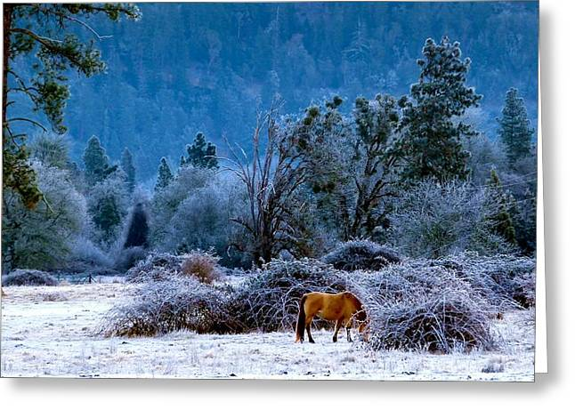 Greeting Card featuring the photograph Frozen Turf by Julia Hassett