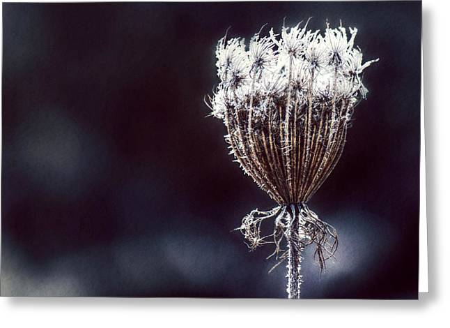 Greeting Card featuring the photograph Frozen Wisps by Melanie Lankford Photography