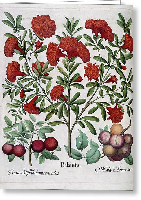 Fruit Greeting Card by British Library