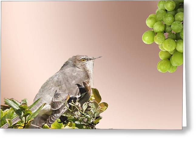 Fruit For A Catbird Greeting Card by Richard Smith