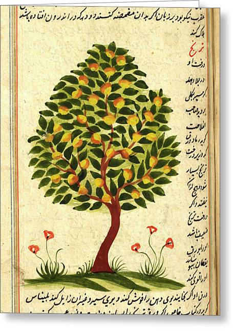 Fruit Tree Greeting Card by British Library