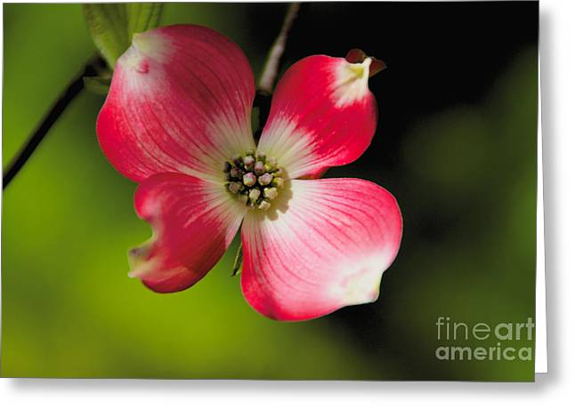 Fruit Tree Flower Greeting Card