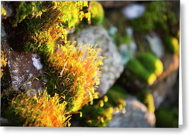 Fruiting Bodies On Moss Greeting Card by Ashley Cooper
