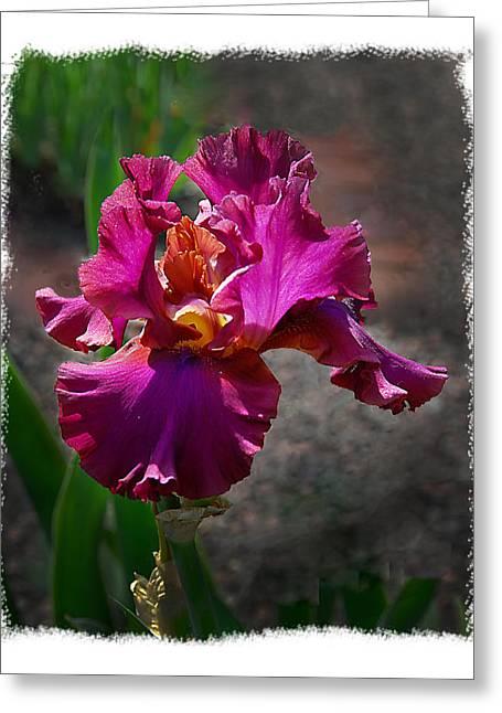 Fuchia Iris Greeting Card by Wynn Davis-Shanks
