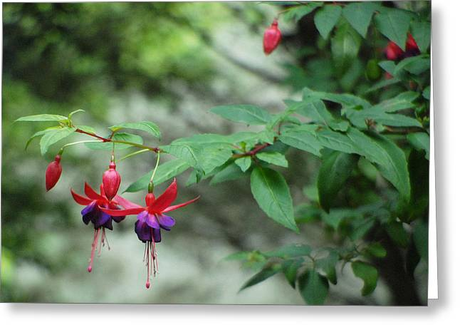 Fuchsia Floral Beauty At Its Best. Greeting Card
