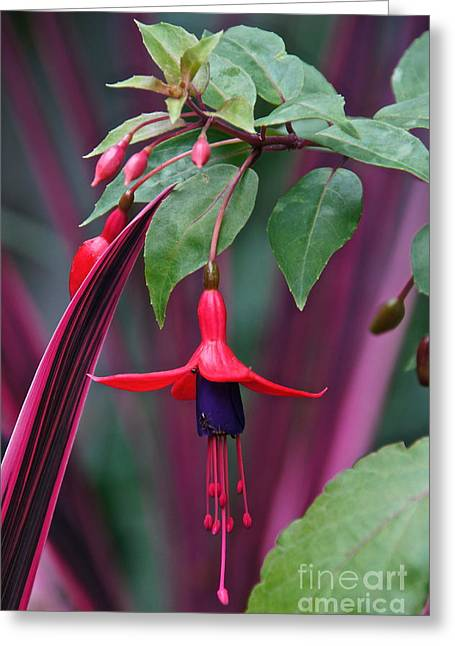 Fuchsia Delight Greeting Card
