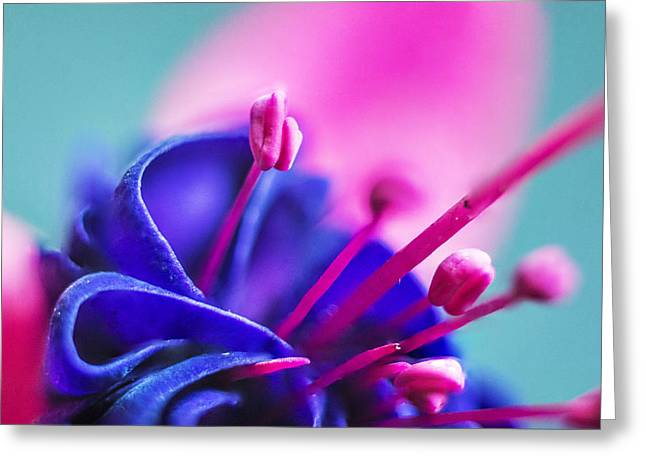 Fuchsia Detail Greeting Card
