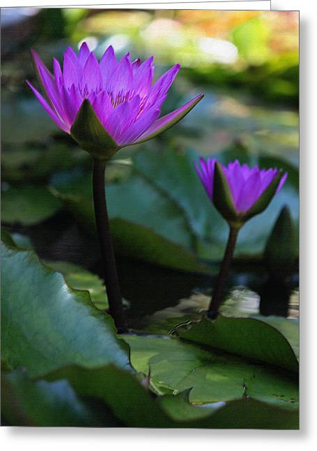 Purple Water Lilies V In Pastel Greeting Card