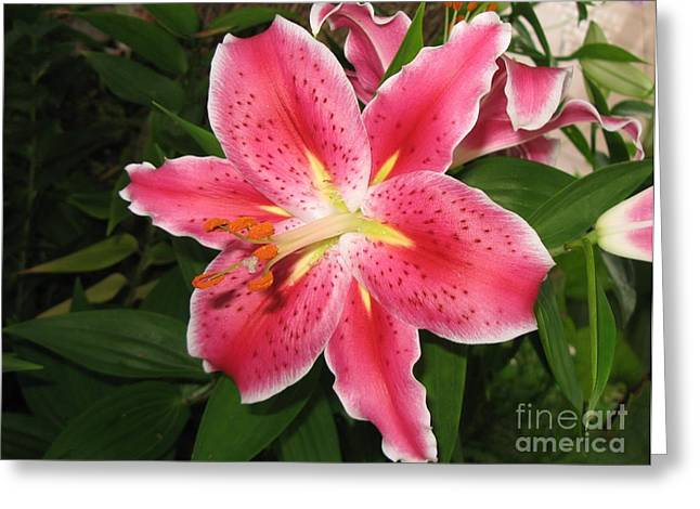 Greeting Card featuring the photograph Fukuoka Lily by Carol Sweetwood