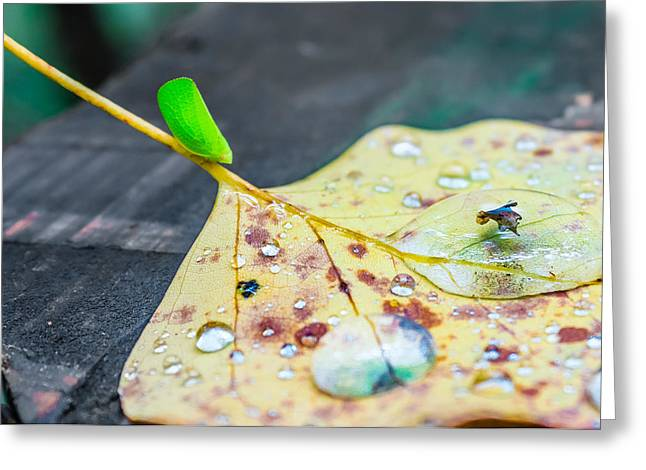 Greeting Card featuring the photograph Fulgoroidea On A Leaf by Rob Sellers