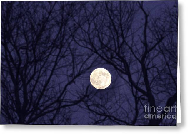 Full Moon Bare Branches Greeting Card by Thomas R Fletcher