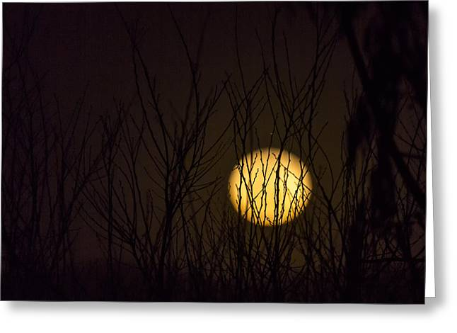 Full Moon Behind The Trees Greeting Card by Angela A Stanton