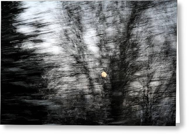 Full Moon Behind Trees Greeting Card by Carolyn Reinhart