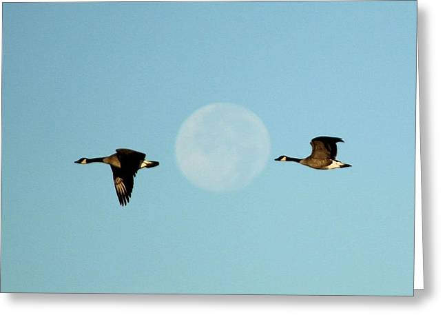 Full Moon Geese Greeting Card