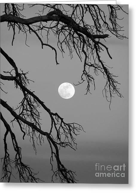 Full Moon Old Snag Greeting Card
