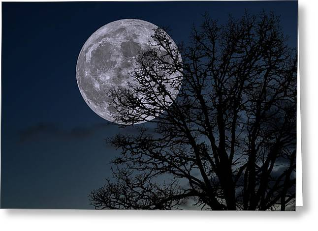 Greeting Card featuring the photograph Full Moon Rising by Dennis Bucklin