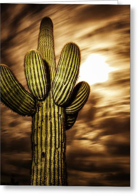 Greeting Card featuring the photograph Full Moon Saguaro by Anthony Citro