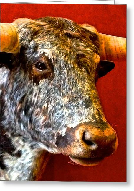 Full Of Bull Greeting Card by Dee Dee  Whittle