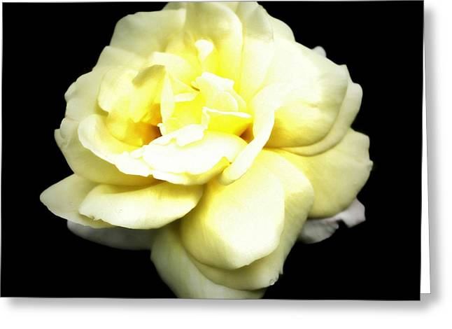 Fully Bloomed Greeting Card by Cathie Tyler