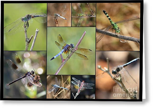 Fun Dragonfly Collage Greeting Card by Carol Groenen