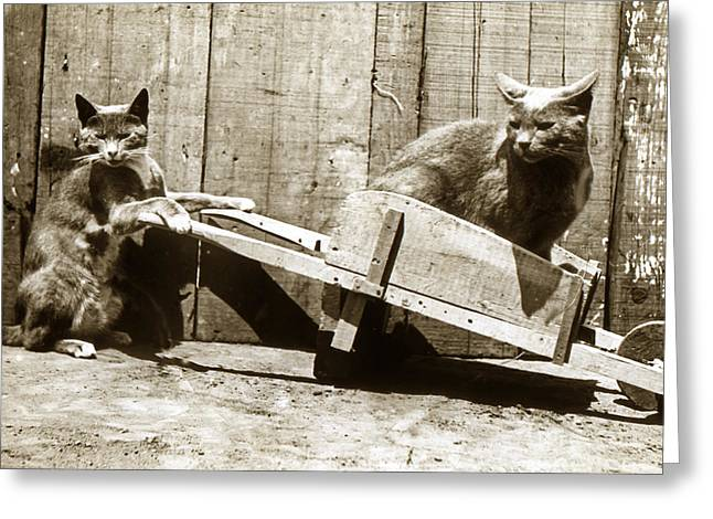 Greeting Card featuring the photograph Fun With Cats Henry King Nourse Photographer Circa 1900 by California Views Mr Pat Hathaway Archives