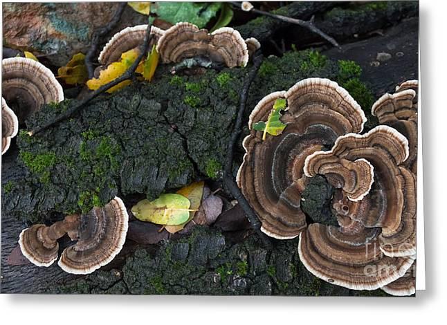 Fungi Contrast Greeting Card