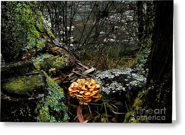 Fungi In The Forest Greeting Card by Al Bourassa