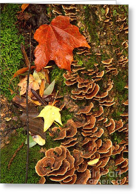 Greeting Card featuring the photograph Fungi by Jim McCain