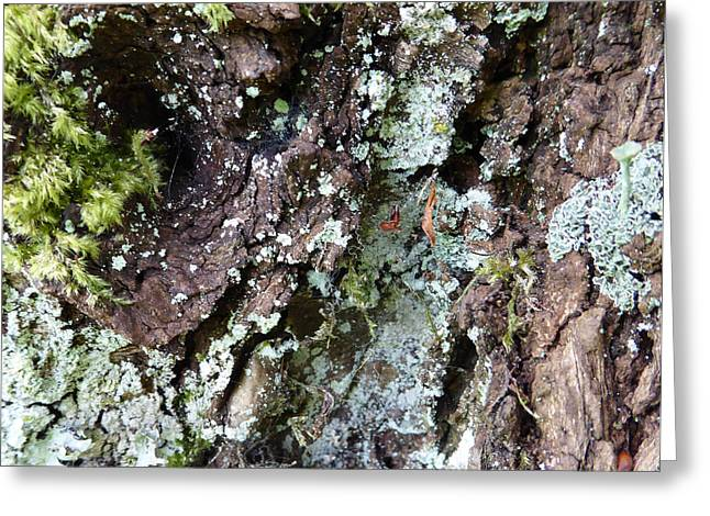 Greeting Card featuring the photograph Fungus Bark by Laurie Tsemak