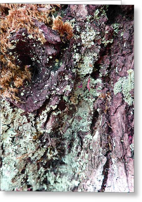 Greeting Card featuring the photograph Fungus Bark Purple by Laurie Tsemak