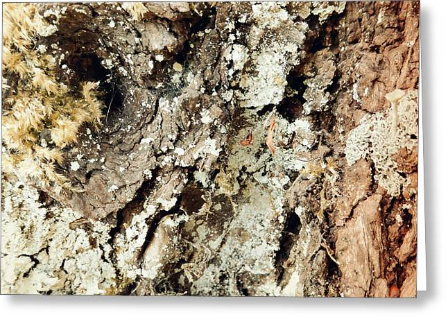 Greeting Card featuring the photograph Fungus Bark Vintage by Laurie Tsemak
